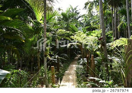 密林の散歩道 26797974