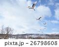 タンチョウ 飛翔 ツルの写真 26798608