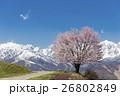 桜 26802849