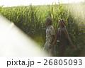 沖縄を観光する男女 さとうきび畑 26805093