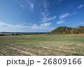 らっきょう畑 26809166