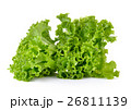 Fresh green lettuce isolated on a white background 26811139