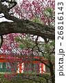 法住寺 竜宮門の紅梅 26816143