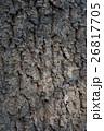 アベマキ樹皮 26817705