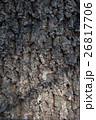 アベマキ樹皮 26817706