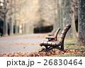 公園 ベンチ 並木路の写真 26830464