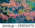 紅葉 楓 秋の写真 26830470