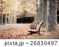 公園 ベンチ 並木路の写真 26830497