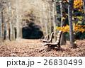 公園 ベンチ 並木路の写真 26830499