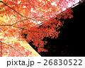 紅葉 楓 秋の写真 26830522