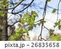 樹木 樹 ツリーの写真 26835658