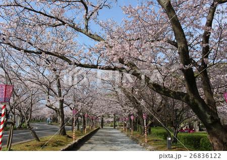 さくら 大村公園 26836122