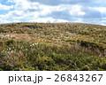 九州への旅、カルスト台地として知られています「平尾台」の風景を、ご紹介いたします。 26843267