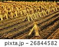 実りの秋の田園風景 26844582