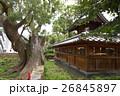 蒲田神社の1000年樟(大阪府大阪市) 26845897