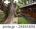 蒲田神社の1000年樟(大阪府大阪市) 26845898