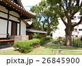 蒲田神社の1000年樟(大阪府大阪市) 26845900