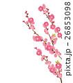 桃の花 26853098