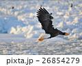 氷海に羽ばたく 26854279