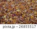 枯葉の絨毯 perming 秋の風景写真素材 26855517
