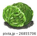 野菜 キャベツ 水彩のイラスト 26855706
