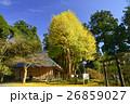 村山浅間神社 秋 イチョウの写真 26859027