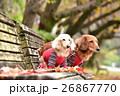 ベンチ 犬 秋の写真 26867770