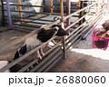 農業 農耕 動物の写真 26880060