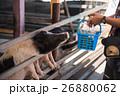 農業 農耕 動物の写真 26880062