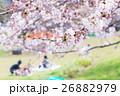 花見 桜の季節 染井吉野 ソメイヨシノ 公園でお花見  26882979