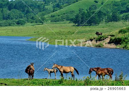馬の楽園 26905663