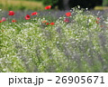 赤白紫の花々 26905671