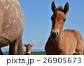 馬さんと青空 26905673