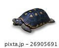 動物 かめ カメの写真 26905691