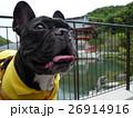 おもしろ犬 犬 フレンチブルドッグ 勝尾寺 interesting dog 26914916