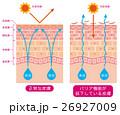 皮膚構造 乾燥肌 断面図 26927009