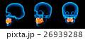 骨 かぶり 頭のイラスト 26939288