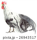 鳥 鶏 尾長鳥のイラスト 26943517