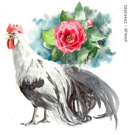 尾長鳥原画椿赤のイラスト素材 26943682 Pixta