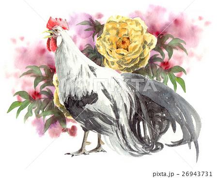 尾長鳥原画牡丹黄のイラスト素材 26943731 Pixta