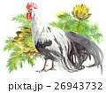 鶏 尾長鳥 水彩のイラスト 26943732