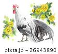 鳥 鶏 尾長鳥のイラスト 26943890