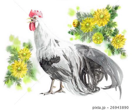 尾長鳥原画福寿草のイラスト素材 26943890 Pixta