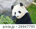 パンダ 26947795