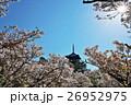 春 御室桜 仁和寺の写真 26952975