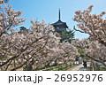 春 御室桜 仁和寺の写真 26952976