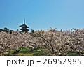 春 御室桜 仁和寺の写真 26952985