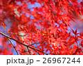 秋の紅葉(もみじ)イメージ。 26967244