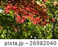 もみじ 秋 初秋の写真 26982040