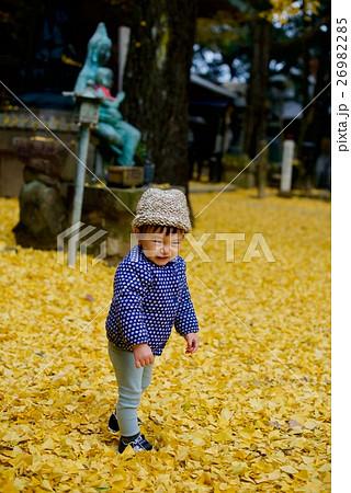 神戸の銀杏(いちょう)再度山は大龍寺、再度山公園、猩々池(しょうじょういけ) 26982285